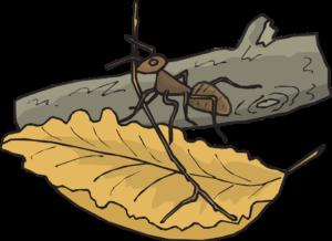 leaf-46136_960_720